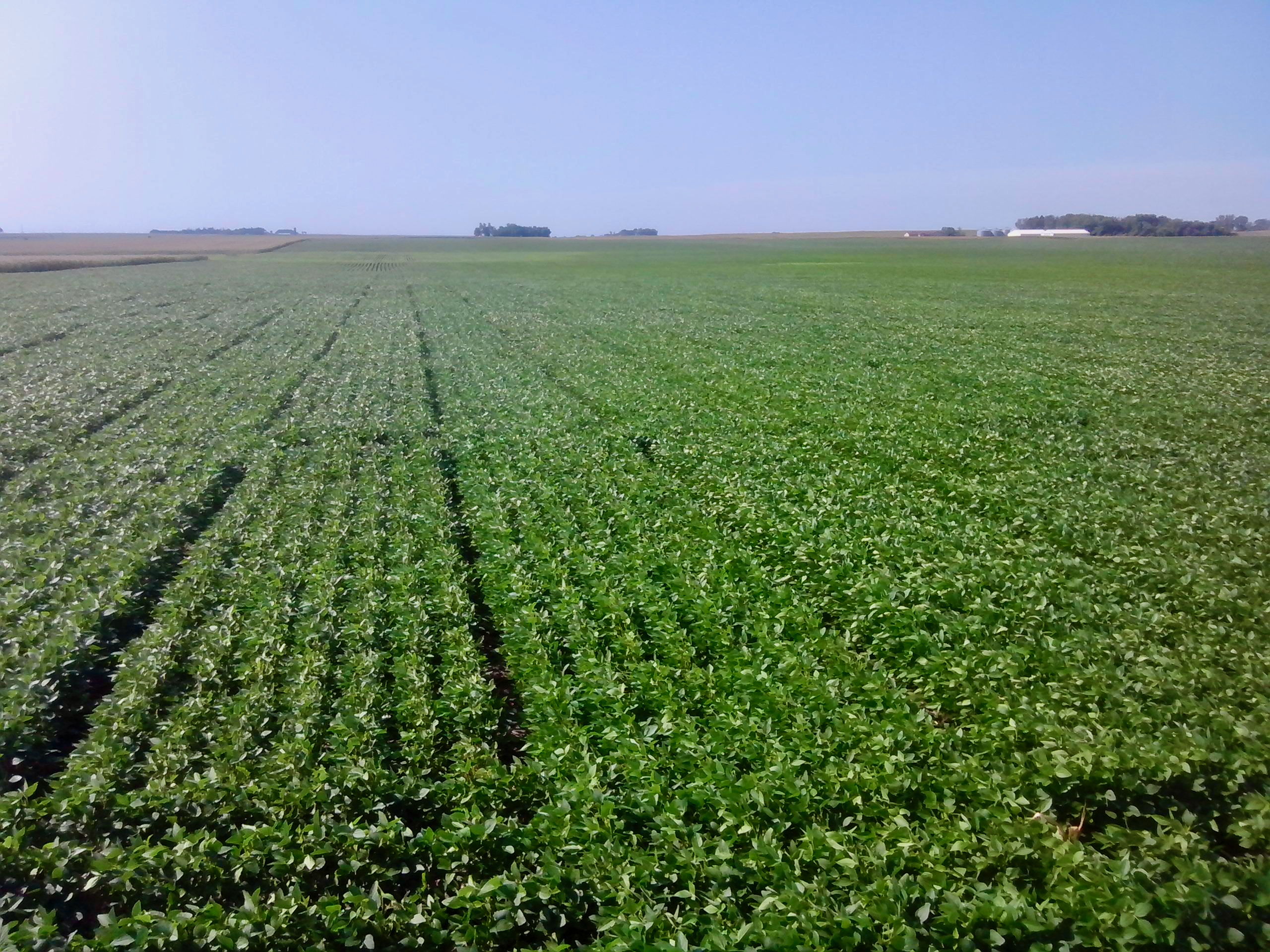 Two New Soybean Composition Research Projects