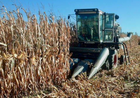 FIRST trials show record corn yields