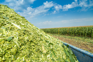 Silage Yield Strong as Harvest Progresses